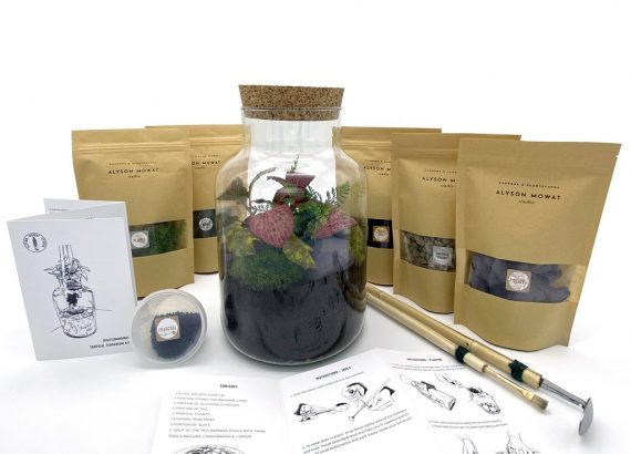 Stay at home terrarium kit